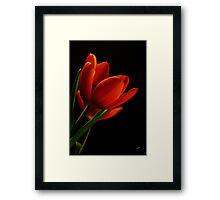 The Tulips * Wall Art Framed Print