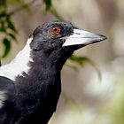Magpie by Meg Hart
