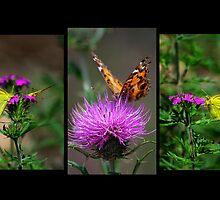 Delicate Beauty ~ Gila National Forest, New Mexico USA by Vicki Pelham