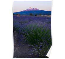 Dusk on Mt. Shasta Poster