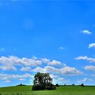 Nebrasky by Tim Wright
