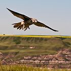 Flight Over the Badlands by Kerri Gallagher