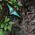 Rainforest 2 Butterfly by Leonie Mac Lean
