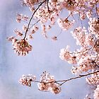 cherry blossoms in spring sky by Iris Lehnhardt