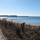 Sands Point, New York by Mary Tomaselli