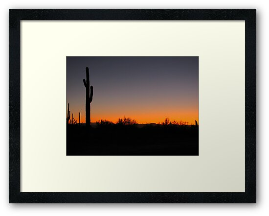 Saguaro Sunset by Kimberly Chadwick