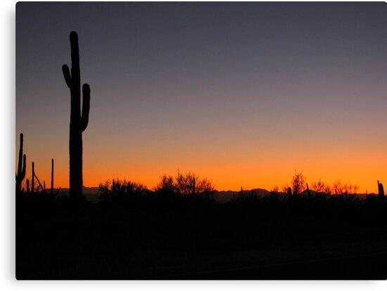 Saguaro Sunset by Kimberly Chadwick