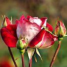Fresh as a Rose Should Be by saxonfenken