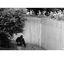 Evolutionary Wall Photographic Print
