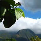 Hawaiian scenery by OneBelovedChild