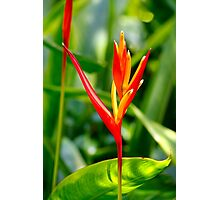 Tropical Flower 2 Photographic Print