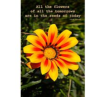 Words of Truth Photographic Print