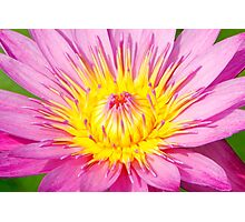 A water lily in close up Photographic Print