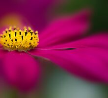 Soft on Cosmos by Jacky Parker