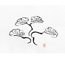 Simple Bonsai Sumi Photographic Print