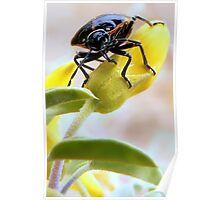 A Very Handsome Beetle Am I Poster