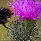 Mr Bumble by Ray Clarke