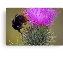 Mr Bumble Metal Print