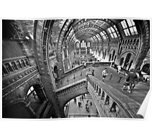 Natural History Museum Staircases - Black and White Version Poster