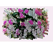Orchids on Display Photographic Print