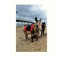 Donkeys on Saltbun beach Art Print