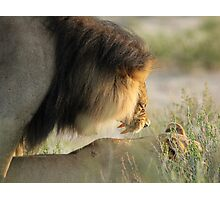 The Mating Roar Photographic Print