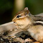 Chipmunk by Sean McConnery