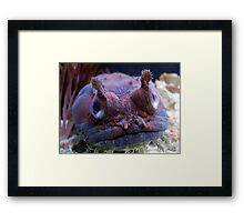 I am keeping my eye on you Framed Print