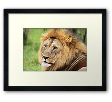 Golden Maned Lion Framed Print