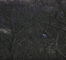 Heron in the trees - Lake District by Brett Housego