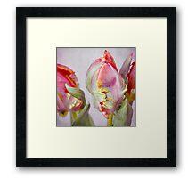 colours of spring Framed Print