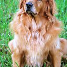 Regal Jake by Colleen Rohrbaugh