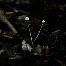 tiny fungi  by Jeff Stroud