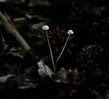tiny fungi  by Jeff Stroud