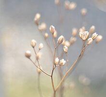winter light by Iris Lehnhardt