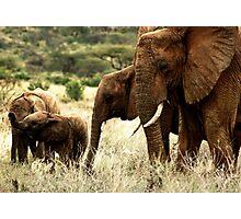 Samburu Photographic Print