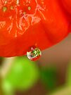 nasturtium reflections by millymuso