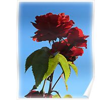 ~ Red Red Roses ~ Poster