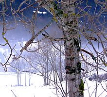 Winter on the Vercors Plateau by Neil Austin