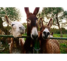 Donkey Storytelling  Photographic Print