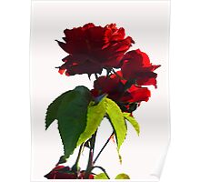 ~  Red Roses ~ Poster