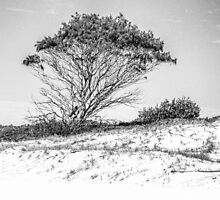 Tree in high key black and white by ©Josephine Caruana