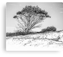Tree in high key black and white Canvas Print