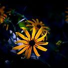 Backlit by NEmens