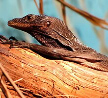 Black Tree Monitor by Veronica Schultz