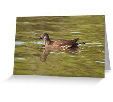 Birds on Bright Water: Juvenile Moorhen Greeting Card