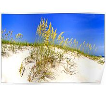 Beach Dune at Clearwater Beach, Fla Poster