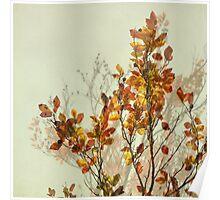 autumn symphonies I Poster