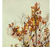 autumn symphonies I Photographic Print