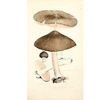 Coloured figures of English fungi or mushrooms James Sowerby 1809 0275 Photographic Print